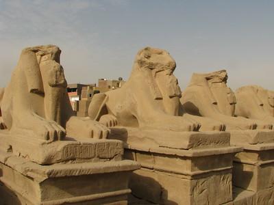 Kosfejű szfinxek II. Ramszesz kartusaival