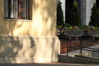 A Flying Shadow