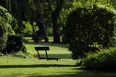 Bench of Contemplation