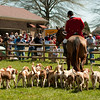 """Doug Russell - Huntsman with the Mecklenburg  Hounds performs as demo at the 2009 Mares event.  <a href=""""http://www.mecklenburghoundsinc.com"""">http://www.mecklenburghoundsinc.com</a>"""