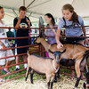 Chester Fair:  Lauren Cibrowski (right) pets prized goats at the Chester Fair on Saturday.  The fair will close Saturday night as Hurricane Irene is expected to arrive early Sunday morning.