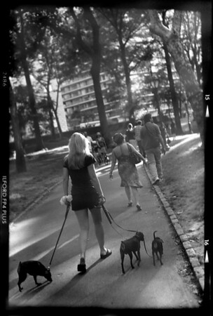 NY 2010 Central Park Dogs