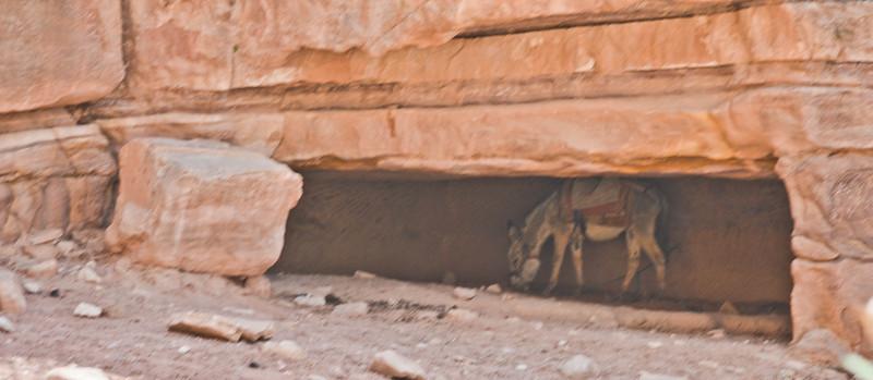 Hidden donkey