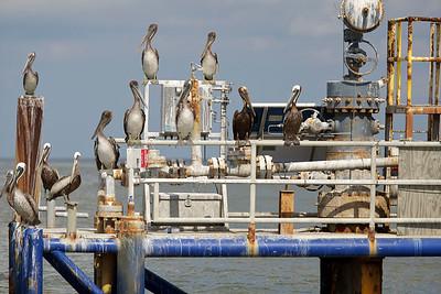 deepwater-horizon-bp-oil-spill-ecological-disaster-photography-jordan-bush-photojournalism-11