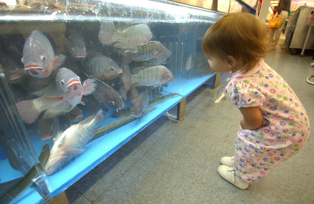 18 month old Ocean Kwak looking at some live fish in a tank under the seafood counter at the Lotte Plaza Asian Market in Ellicott City. Maximilian Franz/The Daily Record  11/4/03.