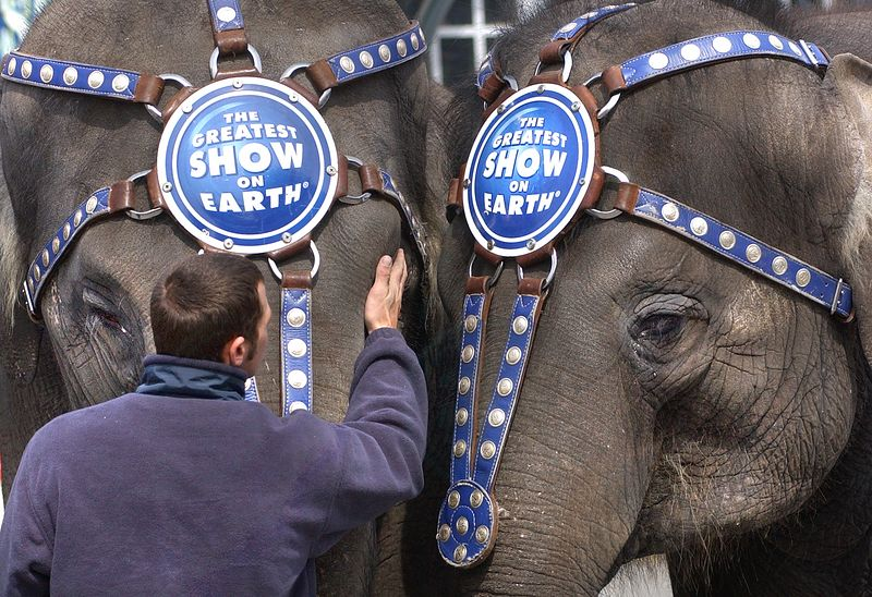 """Ringling Brothers trainer works with two elephants outside of Lexington Market in Baltimore, MD during the annual """"Lunch With the Elephants"""" media event.<br /> Maximilian Franz/The Daily Record"""
