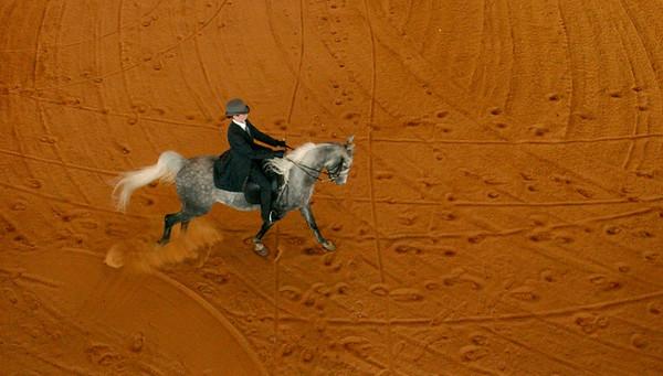 0529_HorseShow015.JPG