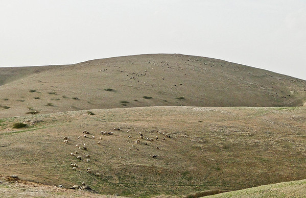 THE PLAINS IN THE OUTSKIRTS OF AMMAN
