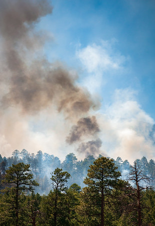 Forest Fire in Coconino National Forest
