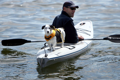 "Chris Ammann/Baltimore Examiner Mike Higgins of Annapolis with his dog ""Norton"" watch as Annapolis bids farewell to the syndicates of the Volvo Ocean Race at the City Dock on Sunday, May 7, 2006."