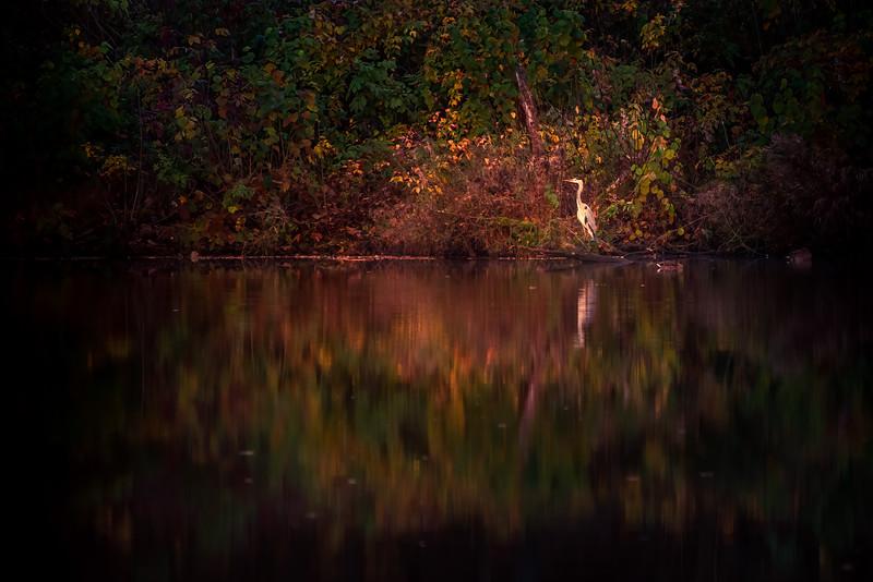 Autumn on the pond