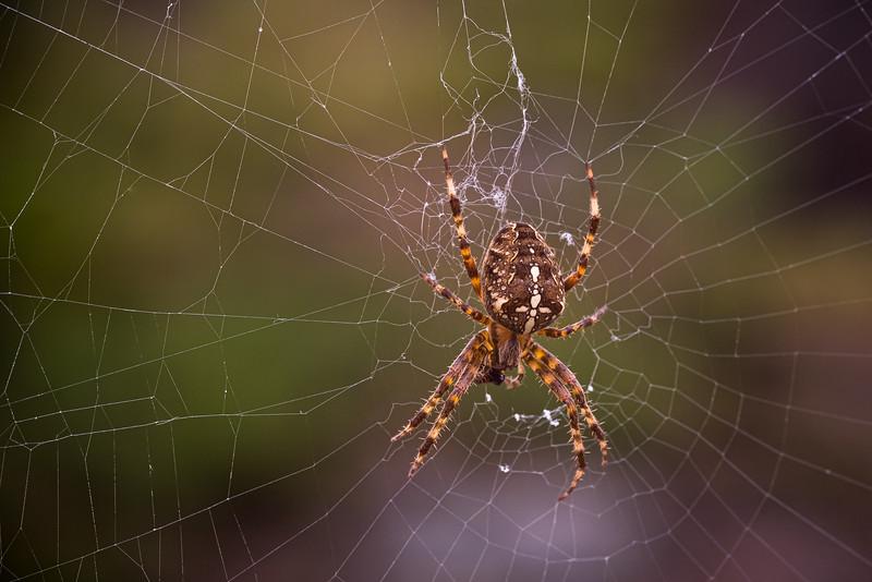 Web designer :)