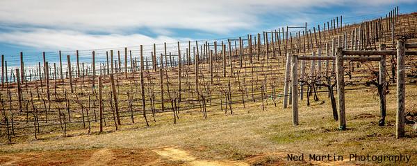 Vineyard at Veritas Vineyards, Afton, VA
