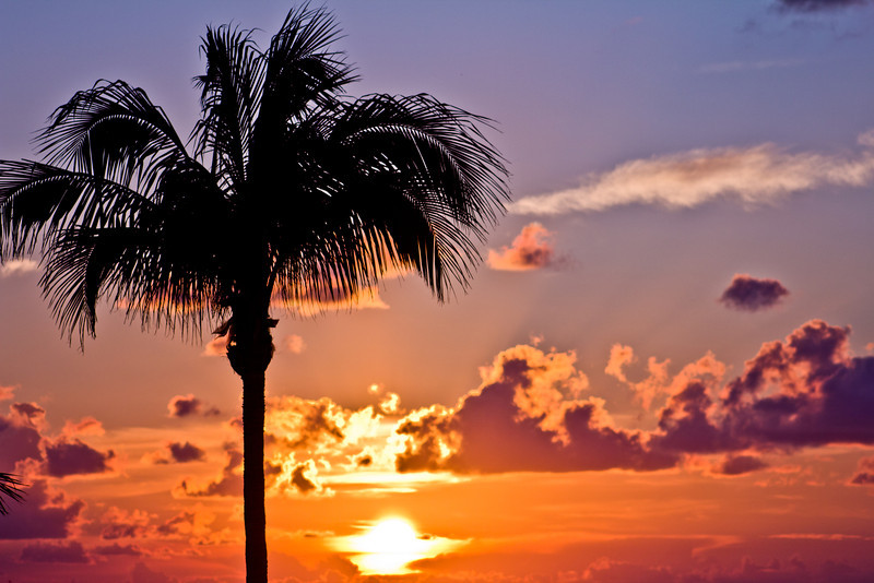 Key West 9.17.11 – The Maitland Wedding Day Sunrise<br /> <br /> I was in K.W. this weekend for the wedding of my friends Larry and Shana (Maitland). This was my second trip to K.W. the first was last year for fantasy fest (late Oct) with Shana, Larry and another friend Beth. <br /> <br /> On this day I just made it to the beach in time to catch the sunrise. I didn't know what I was going to shoot and I hadn't been to this beach before. I saw this palm tree with the sun coming up behind it, and the clouds were perfect. I waited about 5 minutes for the colors to get where I wanted them, and this is what I captured.