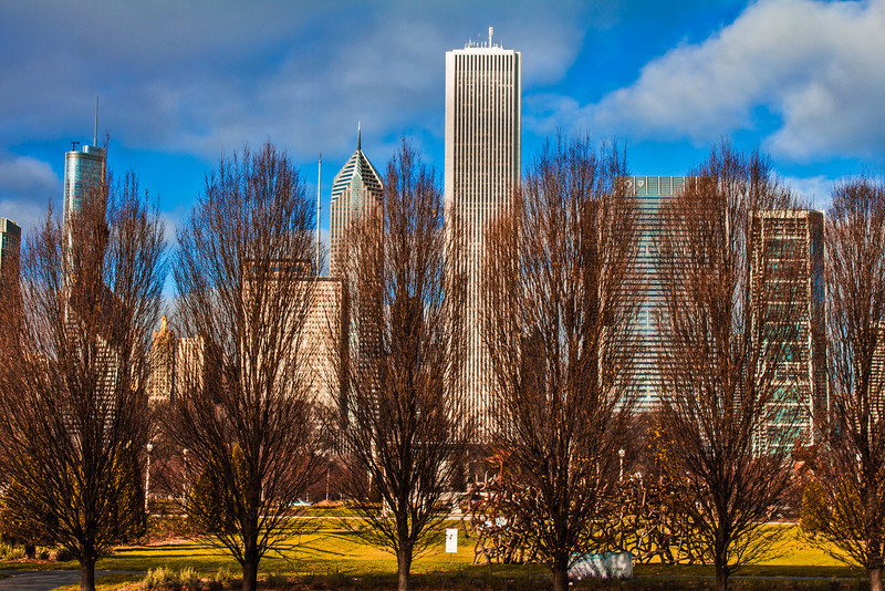 Chicago 12.5.12 <br /> <br /> I noticed these trees in a row, with the skyscrapers in a row behind them and thought it was an interesting composition.