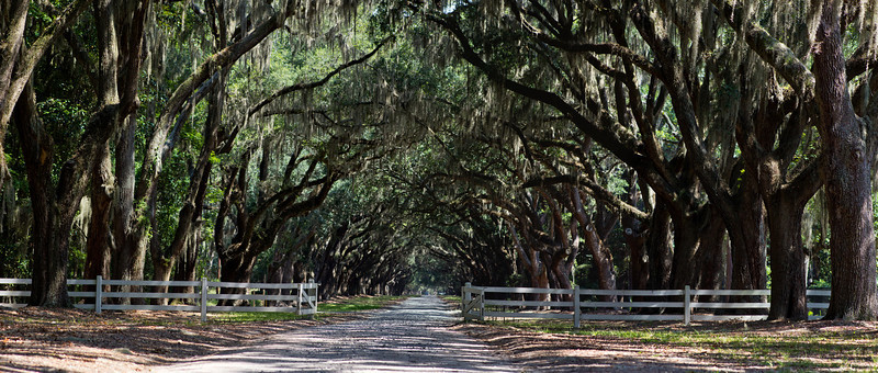 Wormsloe (Savannah GA) <br /> 16x40 or 24x60 Needs just a bit of cropping, but not much.