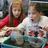 """The 4th graders gathered leaves from the stream through campus and then discovered some amazing macroinvertibrates!  See more photos of their discoveries on Dec. 12 using the Biology Lab's microscopes at <br /> <a href=""""https://saintgeorges.smugmug.com/Academics/LS-4th-Bio-Lab-12-12-18/"""">https://saintgeorges.smugmug.com/Academics/LS-4th-Bio-Lab-12-12-18/</a>"""