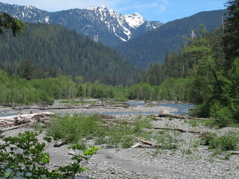 Sunday, June 5, 2011. The Quinault river as we approached the end of a 6 mile hike from our overnight campsite to the trailhead.