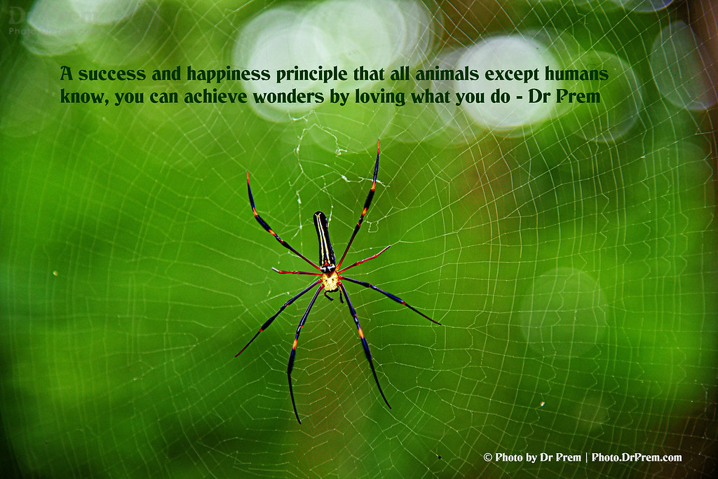 Love what you do - Photoquote - Dr Prem