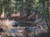 Laurel Lake, Hetch Hetchy Reservoir, Yosemite