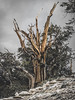 Ancient Bristlecone Pine Forest, Inyo National Forest, CA