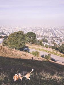 Bernal Heights Park, New Years 2018, San Francisco, Bay Area, CA