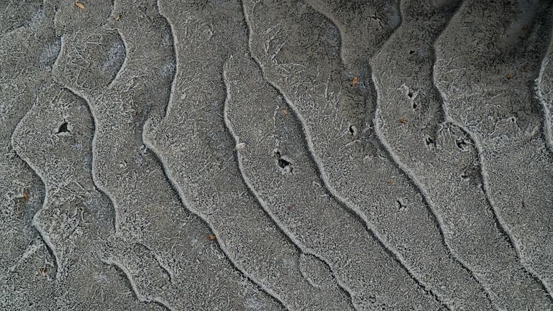 Silty Shoreline