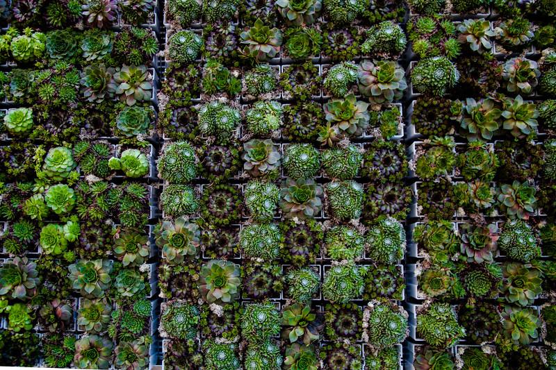 Norwegian Succulents
