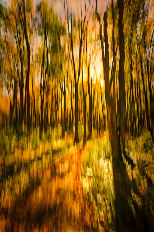 Loree Forest in Autumn