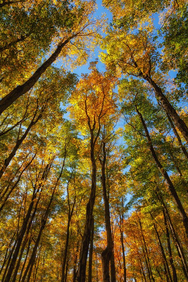 Look Up...Look Way Up