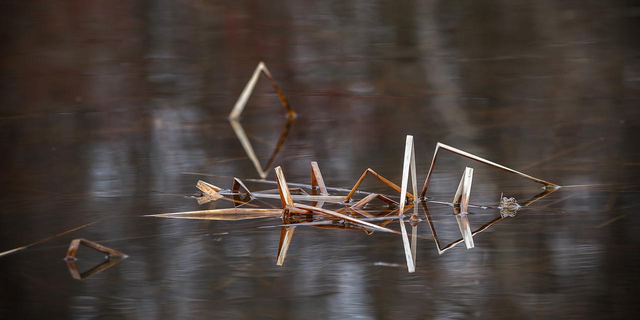 Awakening Pond