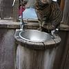 Esalen house cat