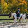 Equestrian 10-2016 024