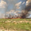 Burning the fields