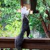 072115_squirrel-1