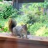 072515_squirrel-1