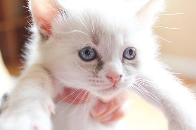 052315_kittens-6