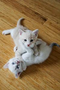 052315_kittens-5