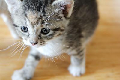 052315_kittens-1