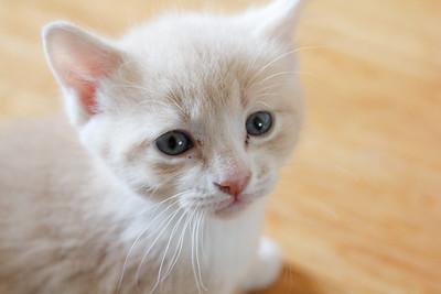 052315_kittens-2