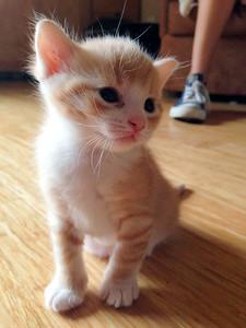 051815_kittens-2