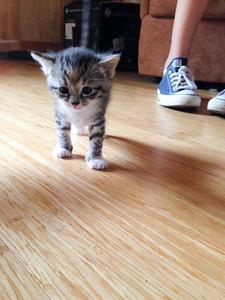 051815_kittens-4