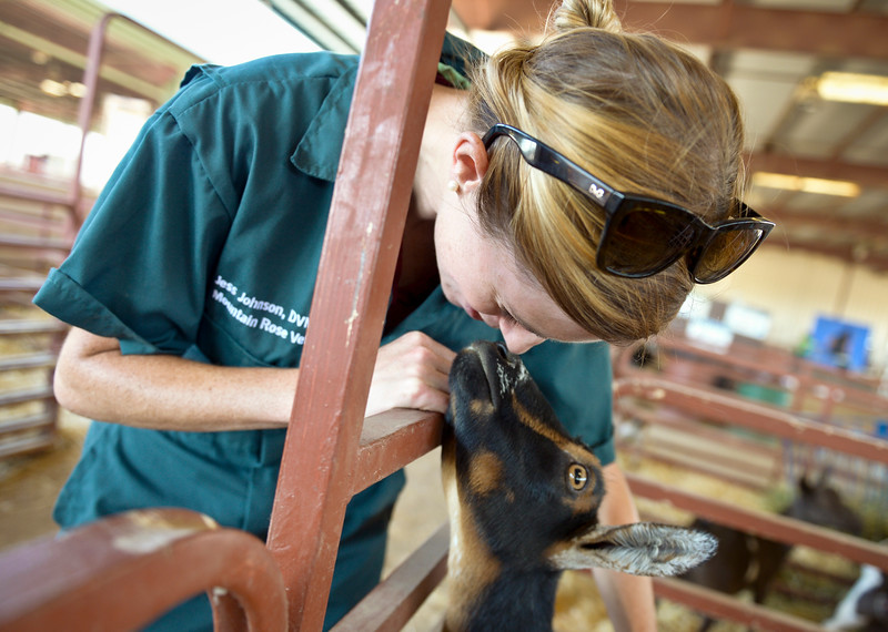 BOULDER COUNTY FAIR VETERINARIAN