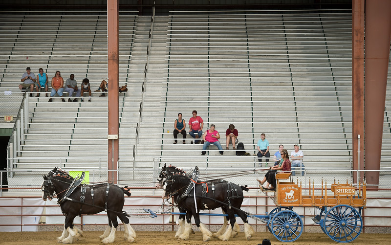 BOULDER COUNTY FAIR DRAFT HORSES