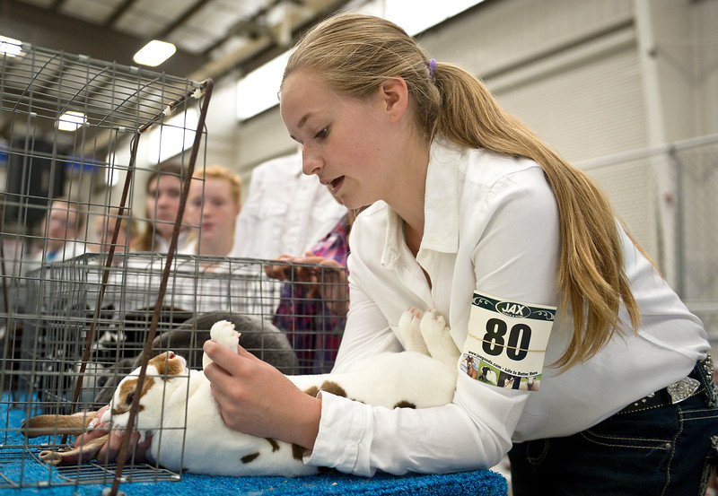 BOULDER COUNTY FAIR RABBIT JUDGING