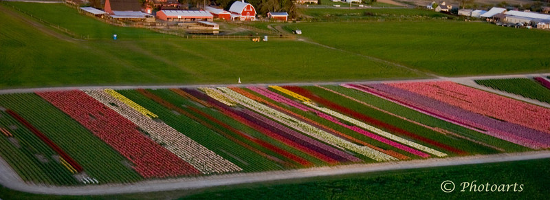 """""""Fields of Color"""""""