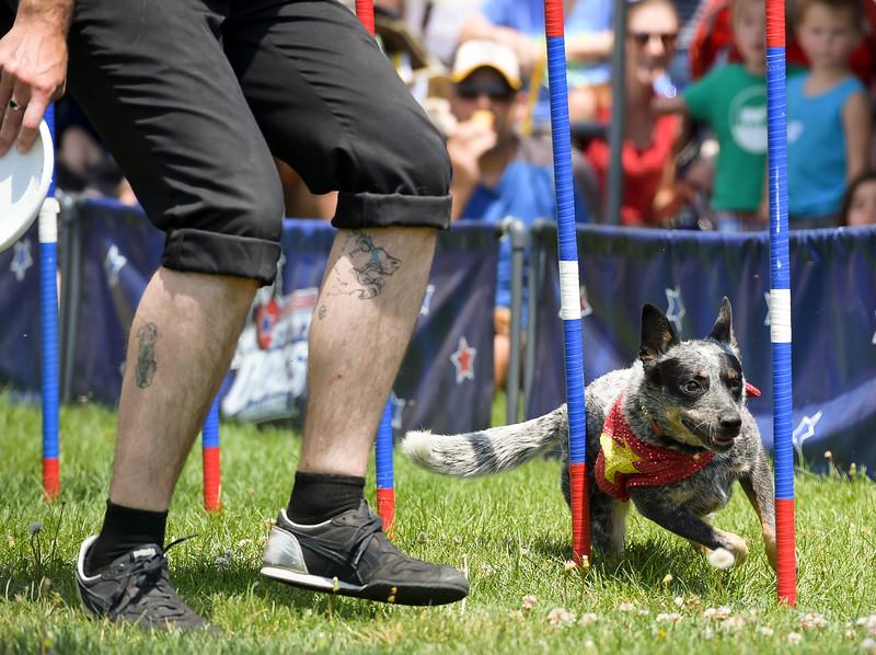 BOULDER COUNTY FAIR STUNT DOGS