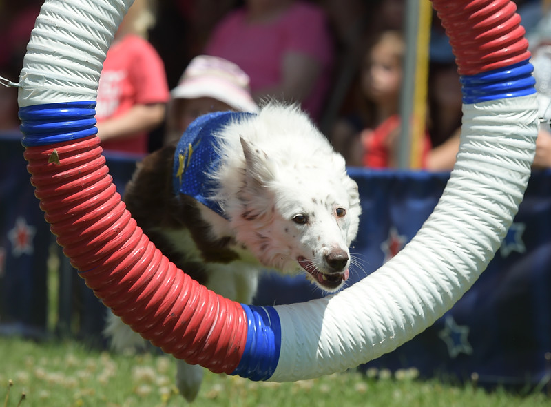 BOULDER COUNTY FAIR STUNT DOGS