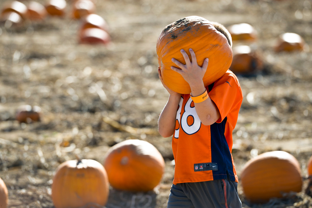 . Bryson Schlueter, 7, of Frederick, carries a pumpkin he picked back to the wagon at Anderson Farms, 6728 County Road 3 1/4, Monday afternoon. Anderson Farms grows 75 varieties of pumpkins with about 300,000 available to be picked. To view more photos visit timescall.com. Lewis Geyer/Staff Photographer Oct. 16, 2017