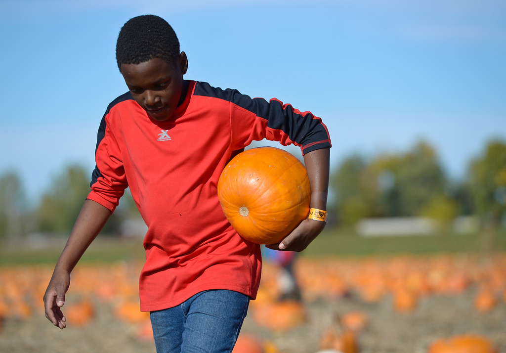 . Adrian Marshall, 9, of Golden, carries his pumpkin back to the wagon in the pumpkin patch at Anderson Farms, 6728 County Road 3 1/4, Monday afternoon. Anderson Farms grows 75 varieties of pumpkins with about 300,000 available to be picked. To view more photos visit timescall.com. Lewis Geyer/Staff Photographer Oct. 16, 2017